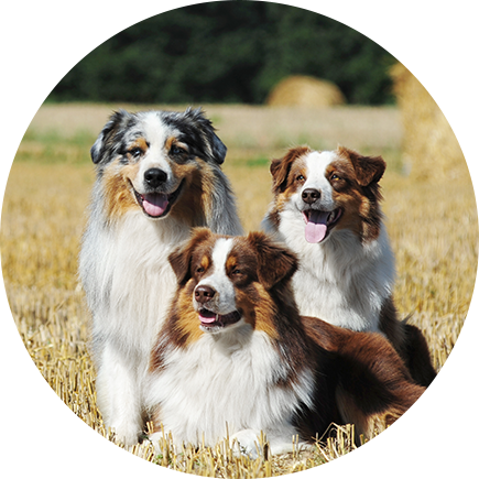 Pet Transport Your Complete Pet Travel Solution Worldwide